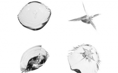 Most Common Types of Windshield Cracks
